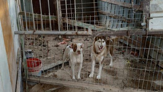 שוטרי משמר הגבול עצרו חשוד שהחזיק במכלאה באופן לא חוקי 14 כלבים