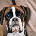 גירושין: הכלב הולך עם אמא או עם אבא?
