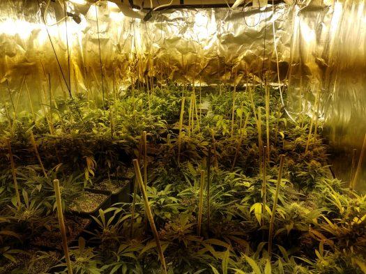סופר מרקט של סמים נמצאו בביתו של צעיר ממושב אביחיל שליד נתניה