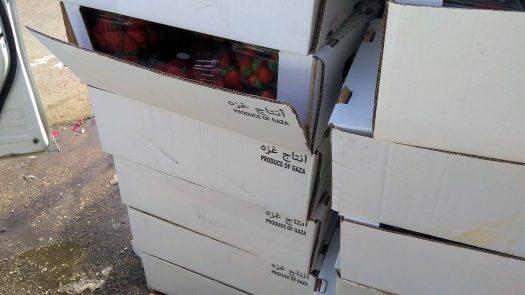 למעלה מטון תותי שדה שהוברחו מעזה לישראל נתפסו היום