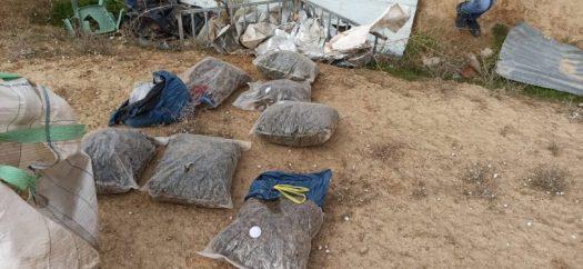 המשטרה חשפה שלושה שטחי גידול קאנביס