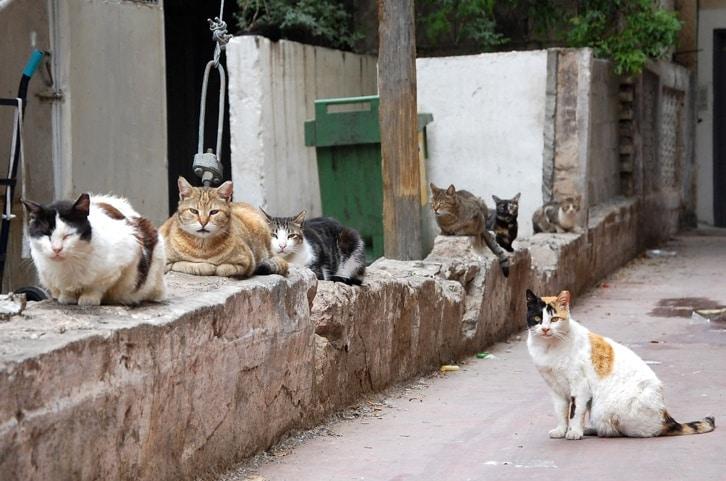פיצויים לשכן ששפך מים לחתולים והוכפש בפייסבוק על ידי אוהבי חיות