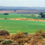 פסיקת העליון מבהירה שרכישה ספקולטיבית של קרקע חקלאית אינה מומלצת