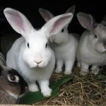 """הווטרינר טוען בביהמ""""ש: חובב ארנבונים השמיץ אותי ברשת"""