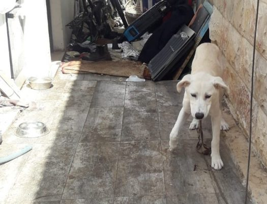 השירות הווטרינרי בראשון לציון החרים כלב בחשד להזנחה והתעללות