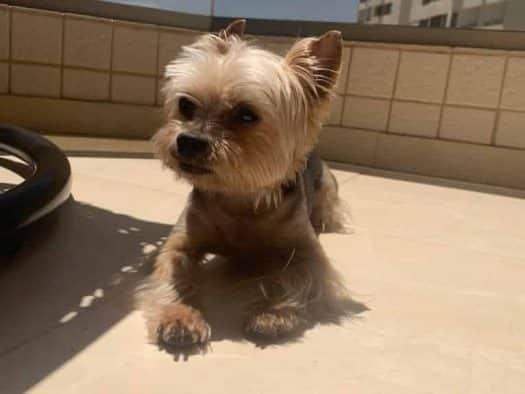 אישום: על רקע ריב על דרך - בעטו למוות בכלב גוצ'י